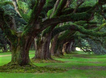 """La Commissione ITPC: """"Gli alberi? Siano patrimonio dell'umanità"""""""