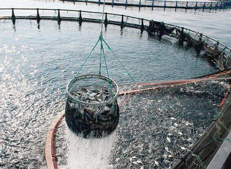 Consumo di pesce fresco a tavola, in Italia è record. E non basta per tutti.