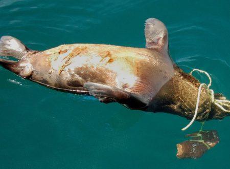 La più pericolosa fonte di plastica per gli oceani di cui nessuno vuole parlare