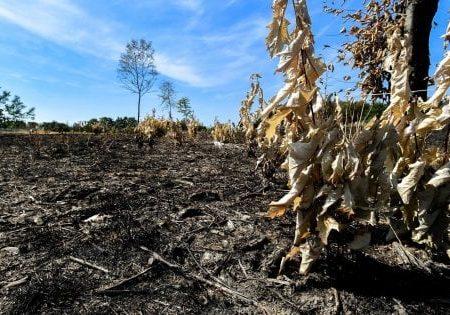 Desertificazione, emergenza globale: il 90% delle terre a rischio entro il 2050