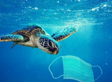 «Le tartarughe marine nel Mediterraneo? Sono indicatori di inquinamento da plastica»